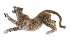 3D que rende Cat Cheetah grande no branco Fotografia de Stock