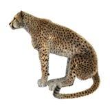 3D que rende Cat Cheetah grande no branco Fotos de Stock Royalty Free