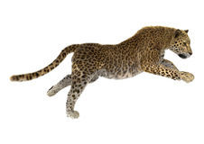 3D que rende Cat Leopard grande Imagem de Stock Royalty Free