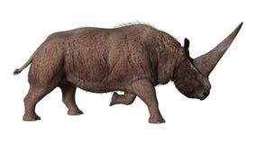 3D que rende Elasmotherium no branco Imagens de Stock