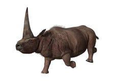 3D que rende Elasmotherium no branco Fotografia de Stock