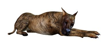 3D que rende grande Dane Dog rajado no branco ilustração do vetor