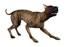 3D que rende grande Dane Dog rajado no branco ilustração stock