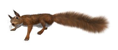 3D que rende o esquilo vermelho europeu no branco ilustração stock