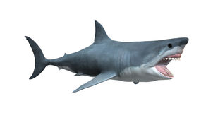 3D que rende o grande tubarão branco no branco Fotos de Stock Royalty Free