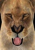 3D que rende o leão fêmea Fotos de Stock Royalty Free