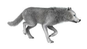 3D que rende o lobo polar no branco Imagem de Stock Royalty Free