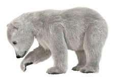3D que rende o urso Cub polar no branco Fotos de Stock Royalty Free