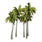 3D que rende palmeiras de Coconat no branco Fotos de Stock