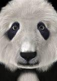 3D que rende Panda Bear Head Ilustração Stock