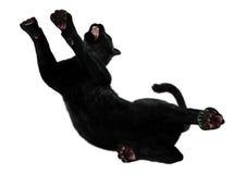 3D que rende a pantera preta no branco Foto de Stock
