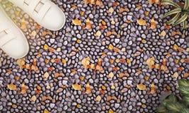 3d que rende a planta e a sapatilha da vista superior no seixo colorido moeu com brilho do sol ilustração stock
