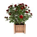 3D que rende Rose Bush vermelha no branco Fotografia de Stock Royalty Free