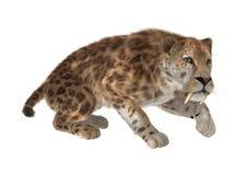 3D que rende Saber Tooth Tiger no branco Ilustração Royalty Free