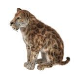 3D que rende Saber Tooth Tiger no branco Ilustração do Vetor