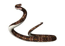 3D que rende a serpente da víbora de Gaboon no branco Foto de Stock Royalty Free