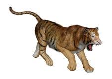 3D que rinde a Cat Tiger grande en blanco Fotografía de archivo libre de regalías