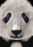 3D que rinde a Panda Bear Head Fotografía de archivo
