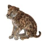 3D que rinde a Saber Tooth Tiger en blanco Imagen de archivo libre de regalías