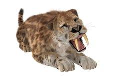 3D que rinde a Saber Tooth Tiger en blanco Fotos de archivo libres de regalías