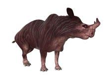 3D que torna Kiroi animal no branco Fotos de Stock