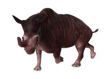 3D que torna Kiroi animal no branco Imagem de Stock