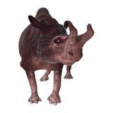 3D que torna Kiroi animal no branco Imagem de Stock Royalty Free