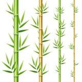 3d réaliste a détaillé des pousses de bambou réglées Vecteur illustration de vecteur