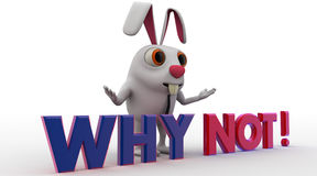 3d rabbit with why not text concept Royalty Free Stock Images
