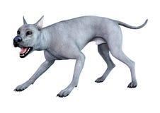 3D rappresentazione Grat Dane Dog blu su bianco fotografia stock libera da diritti