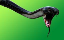 3d re Cobra Black Snake il serpente velenoso più lungo del ` s del mondo isolato su fondo verde Immagine Stock Libera da Diritti