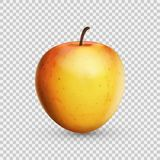 3D realistic apple isolated on transparent background. Vector illustration. Eps 10 Royalty Free Stock Photo