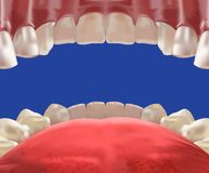 3d Realistic mouth cavity view from inside royalty free illustration