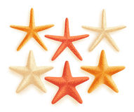 3D Realistic Set of Vector Starfish with Different Colors for Summer Design Royalty Free Stock Photography