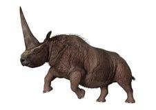 3D rendant Elasmotherium sur le blanc Images libres de droits