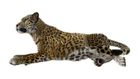3D rendant grande Cat Jaguar Image libre de droits