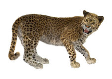 3D rendant grande Cat Leopard Images libres de droits