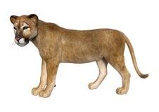 3D rendant grande Cat Puma sur le blanc illustration libre de droits