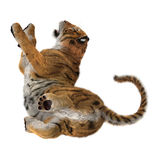 3D rendant grande Cat Tiger sur le blanc Images libres de droits