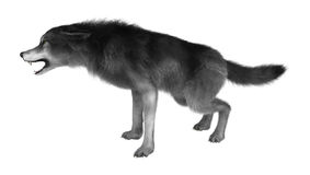 3D rendant Gray Wolf sur le blanc Photo libre de droits