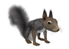 3D rendant Grey Squirrel oriental sur le blanc Images libres de droits
