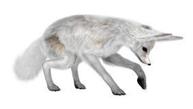 3D rendant le Fox de Fennec sur le blanc Image libre de droits