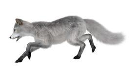 3D rendant le Fox polaire sur le blanc Image libre de droits