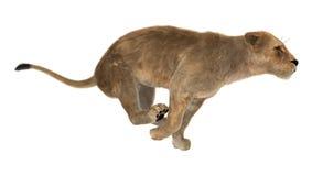 3D rendant le lion femelle sur le blanc Images stock