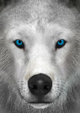3D rendant le loup arctique Photos stock