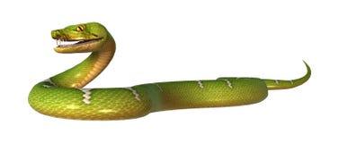 3D rendant le python vert d'arbre sur le blanc Image libre de droits