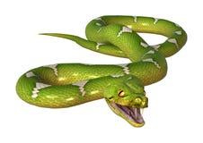3D rendant le python vert d'arbre sur le blanc Images libres de droits