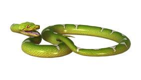 3D rendant le python vert d'arbre sur le blanc Photographie stock libre de droits