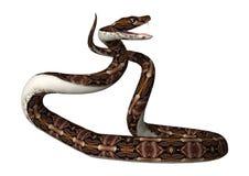 3D rendant le serpent de vipère de Gaboon sur le blanc Photo libre de droits