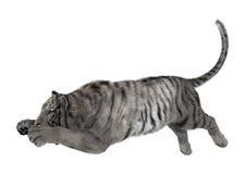 3D rendant le tigre blanc sur le blanc Image stock